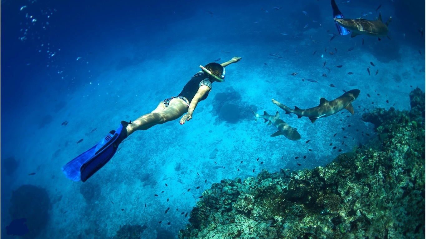 девушка, акулы, фото, под водой
