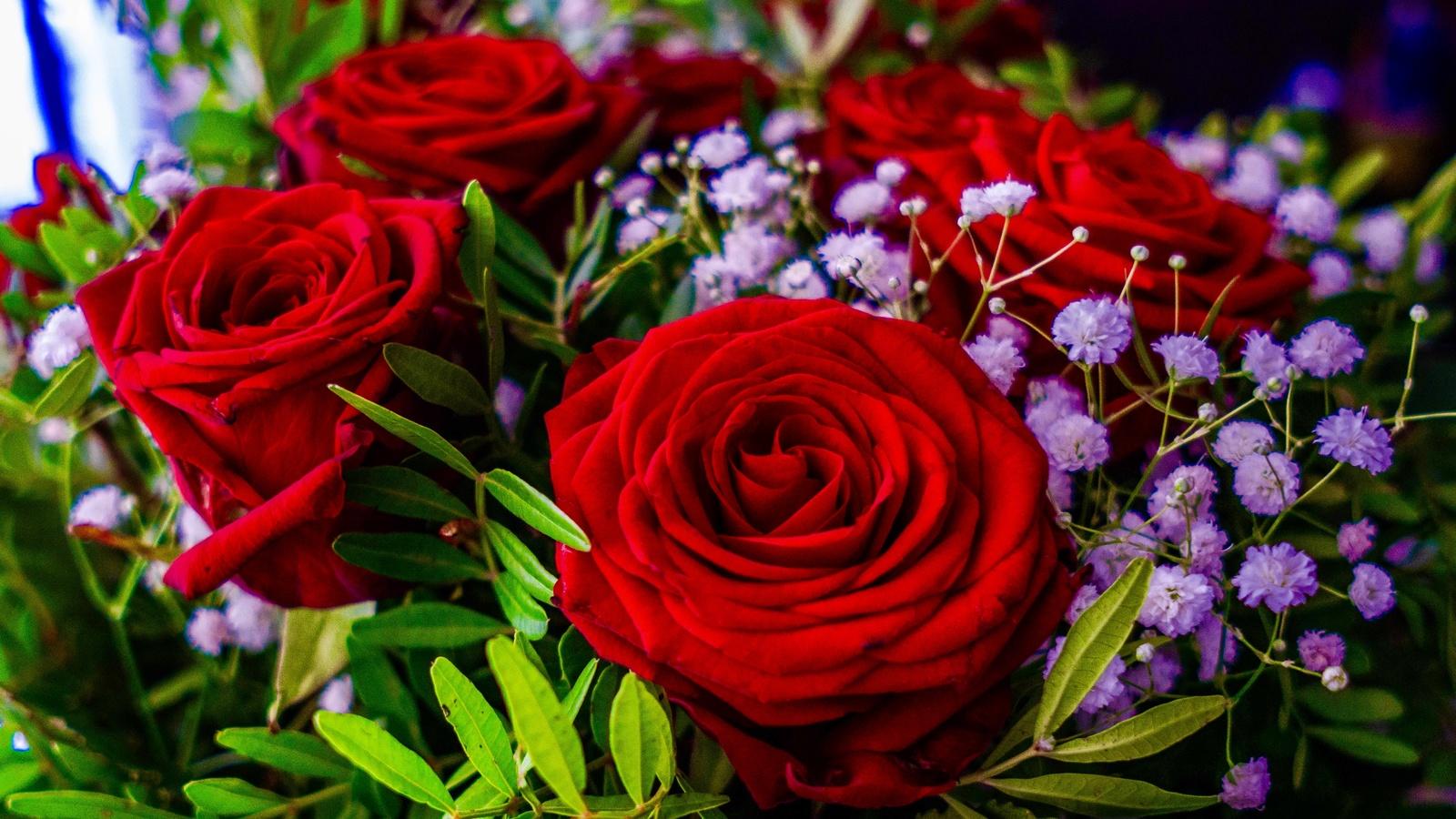 розы, цветы
