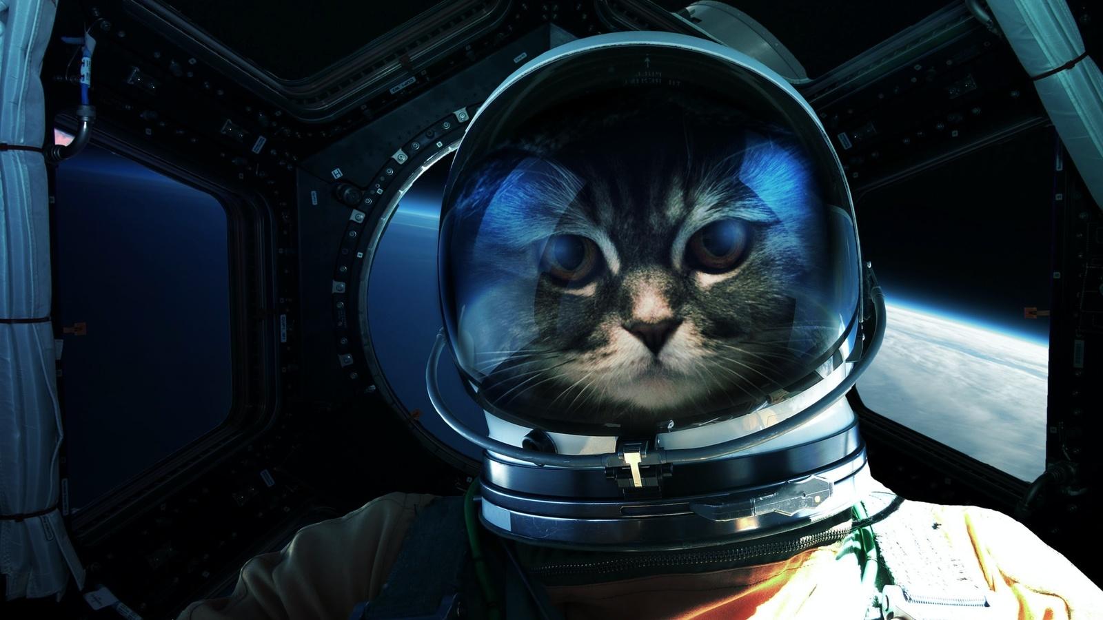 кот, космонавт