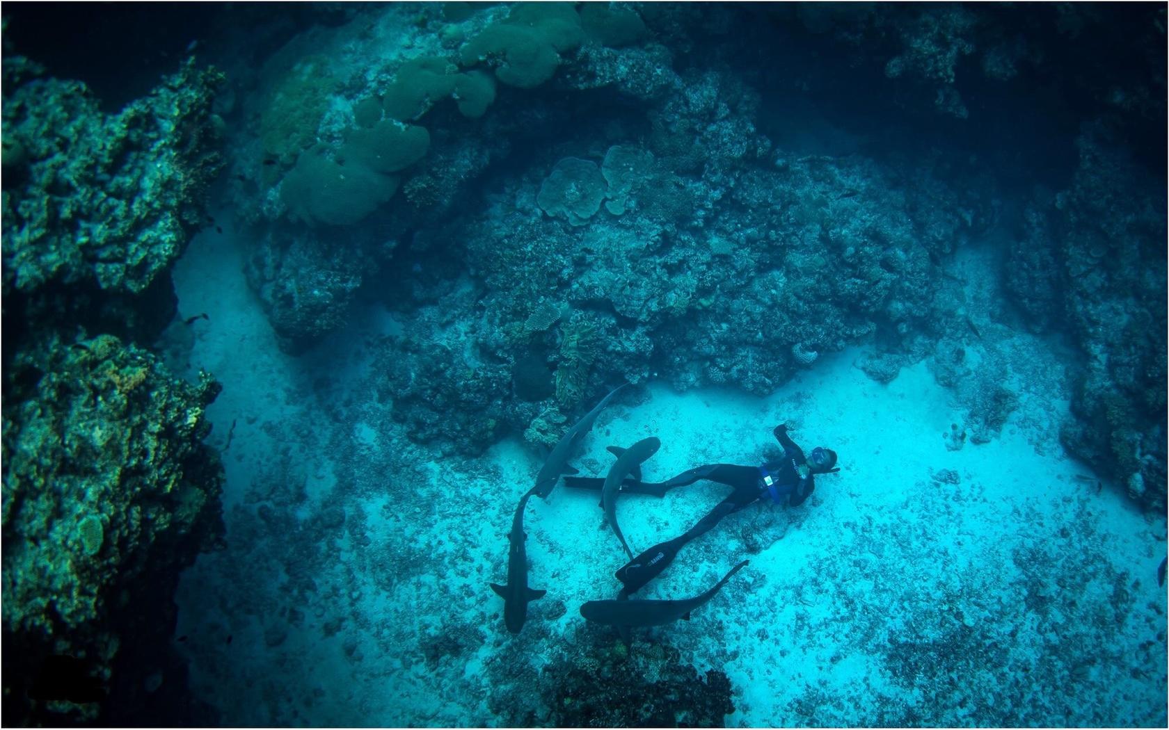 фото, под водой, акулы, дайвинг