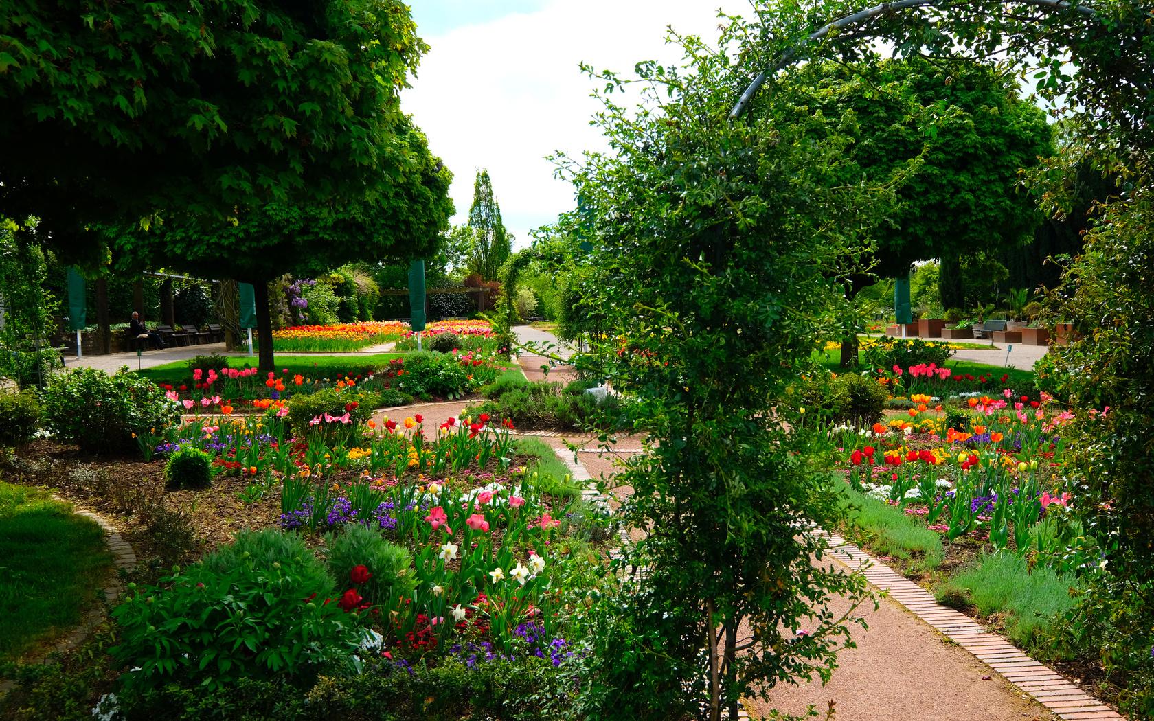 германия, парк, тюльпаны, botanischer garten solingen, кусты, природа
