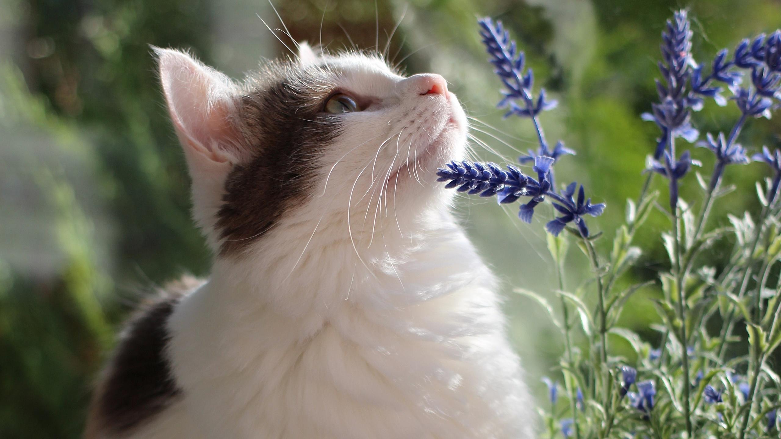 животное, кот, кошка, взгляд, природа, цветы, лето