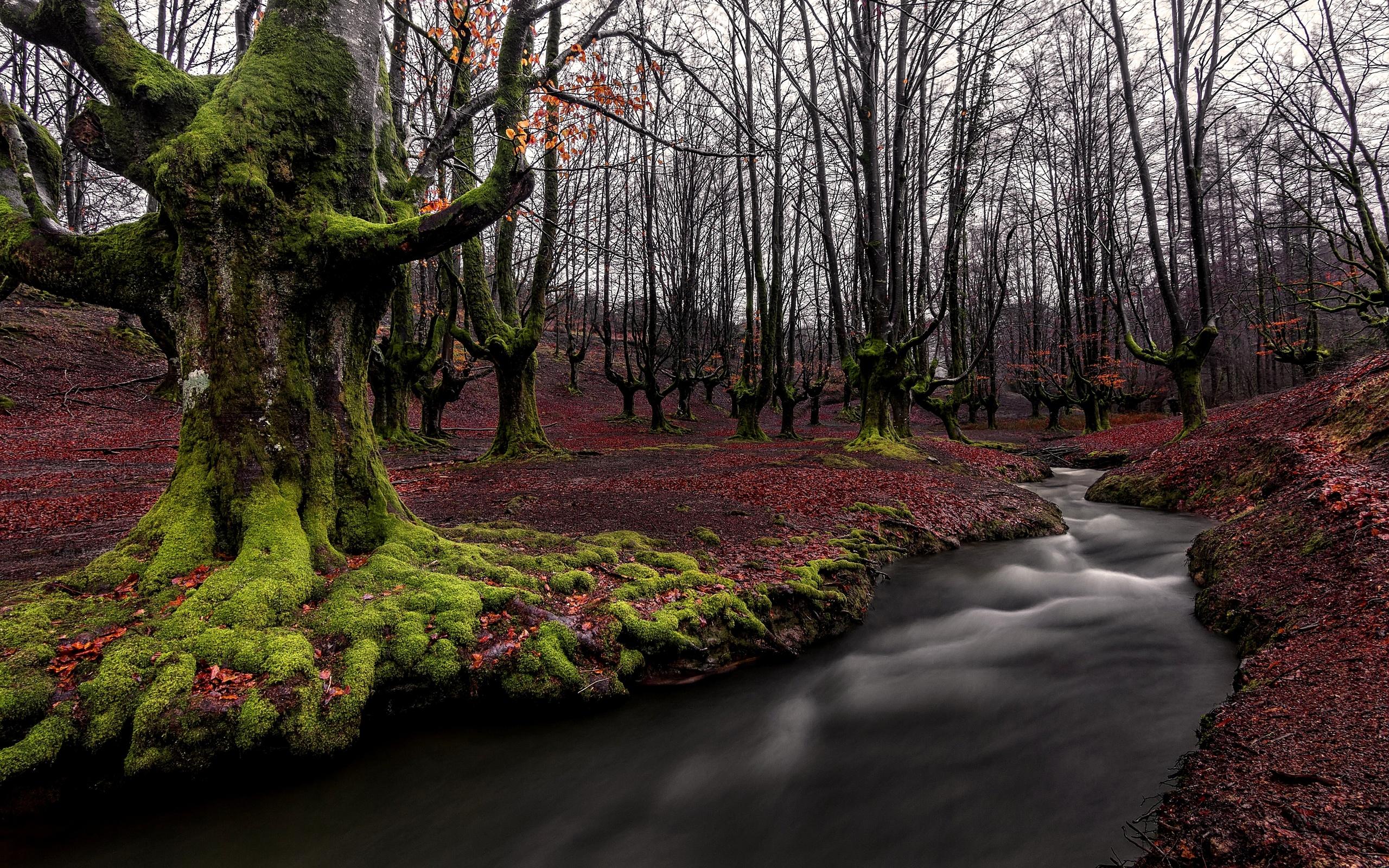 река, ручей, листья, мох, осень