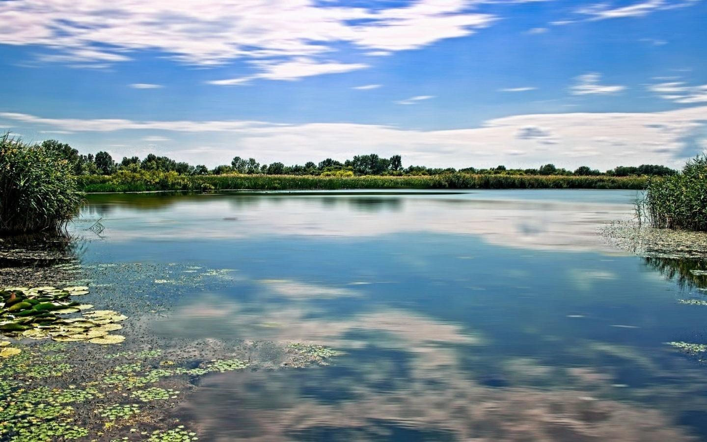 река, зелень, лето