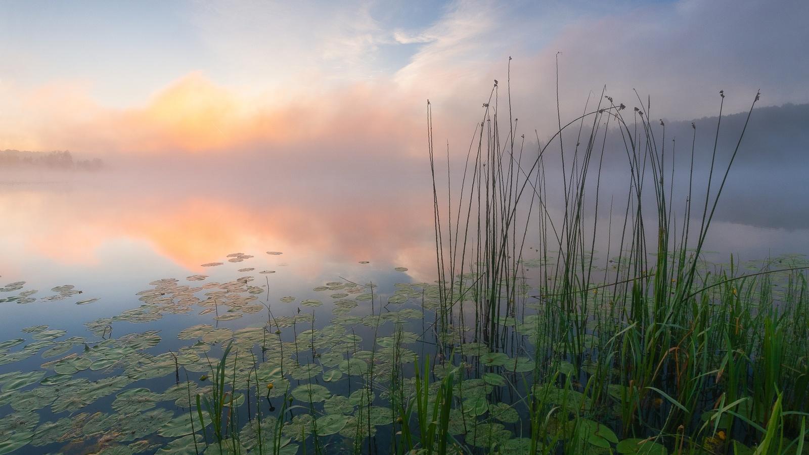 лето, речка, кувшинки, туман, пейзаж, красиво, утро, фотограф, андрей олонцев