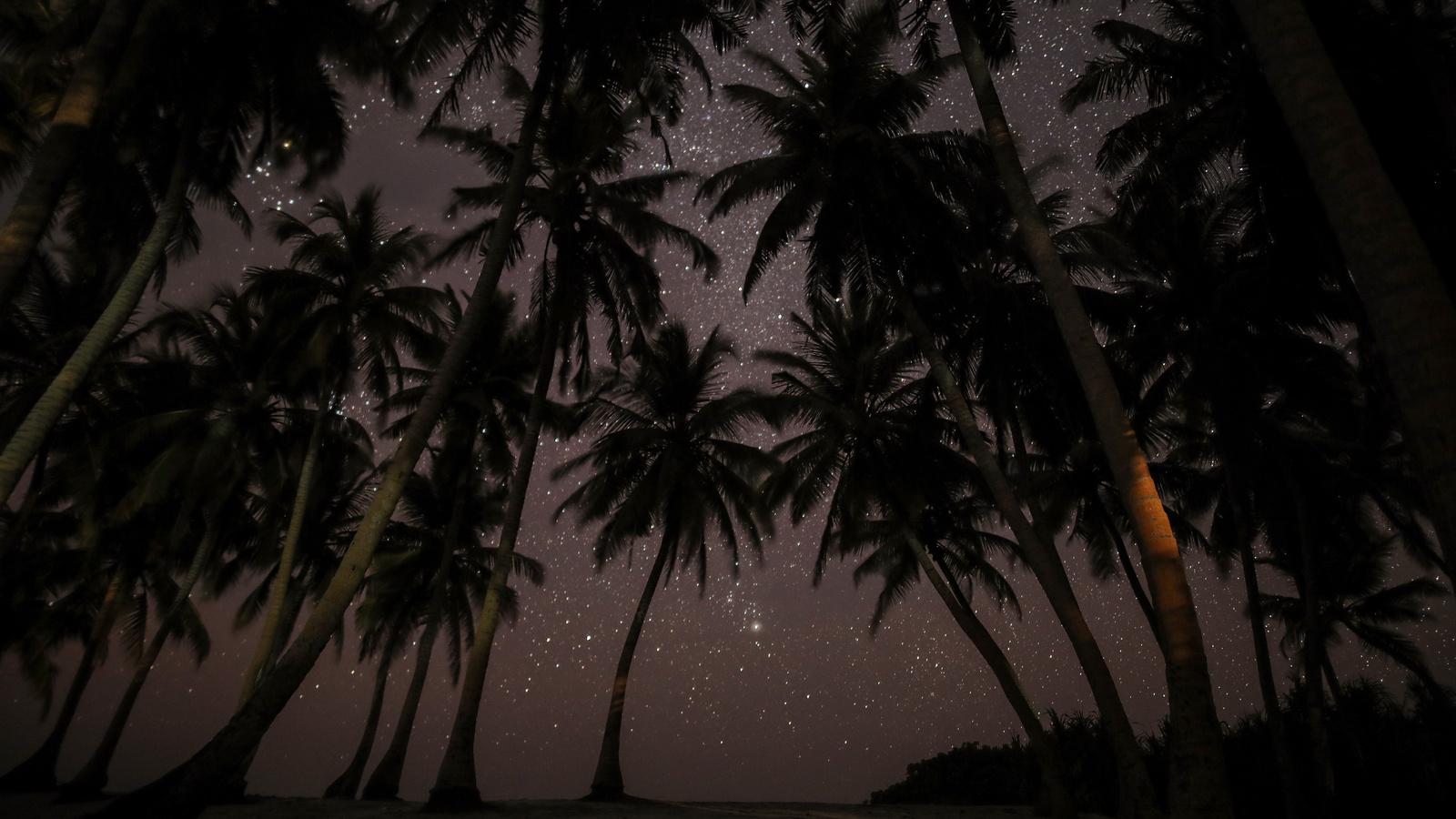 природа, пейзаж, красота, ночь, ночной, тропики, тропический, лес, джунгли, пальмы, пальма, звёзды, звезда, звёздный, свет, небо, тьма, мрак