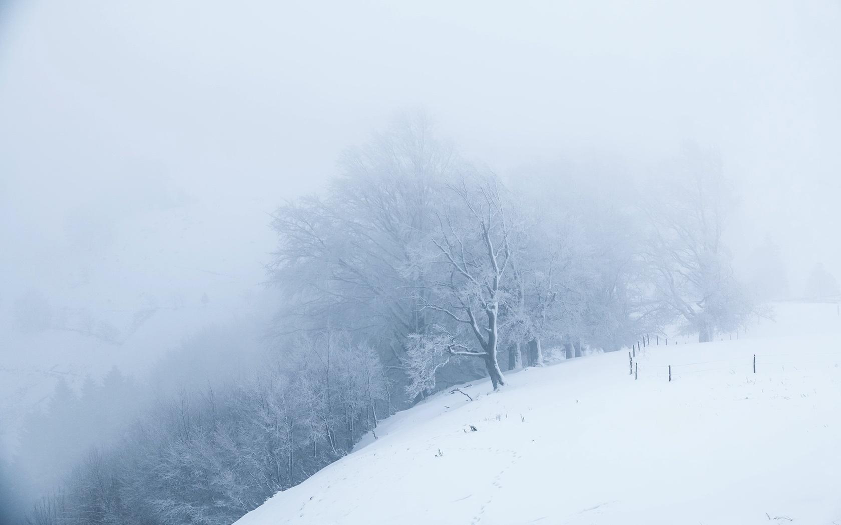 снег, белый мир, деревья, туман, утро, зима