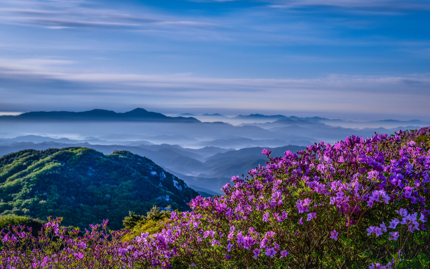 природа, пейзаж, корея, горы, hwangmaesan, туман, облака, цветы, азалия, рододендроны