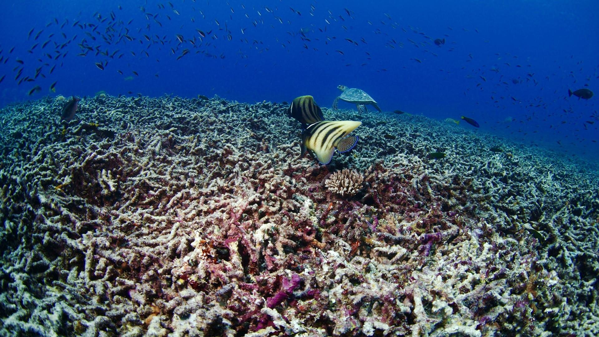 фото, под водой
