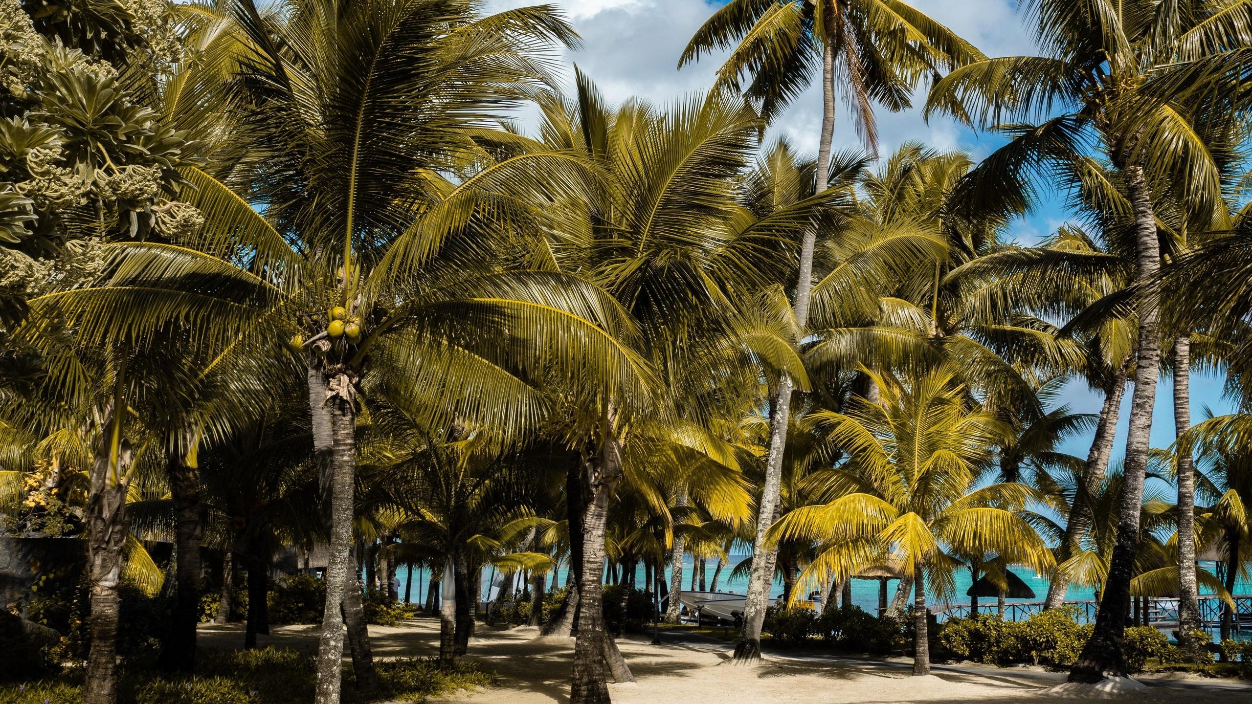природа, пейзаж, тропики, тропический, пальма, пальмы, джунгли, лес, пляж, песок, море, морской, океан, океанский, небо, солнечный, солнце, причал