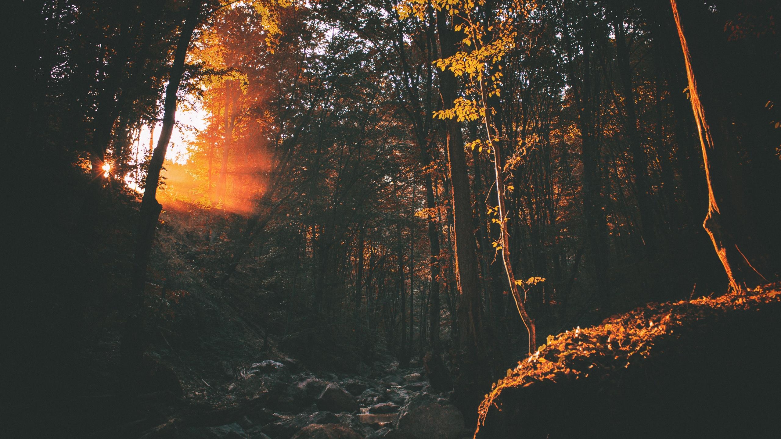 темно, рассвет, окружающая среда, вечер, осень, лес, пейзаж, свет, природа