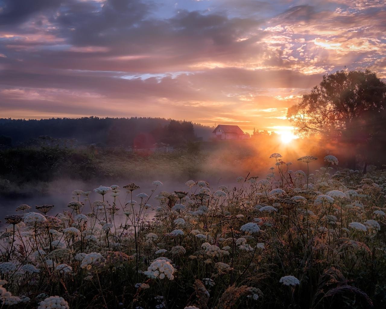 природа, пейзаж, речушка, берега, травы, лес, дерево, рассвет, утро, туман