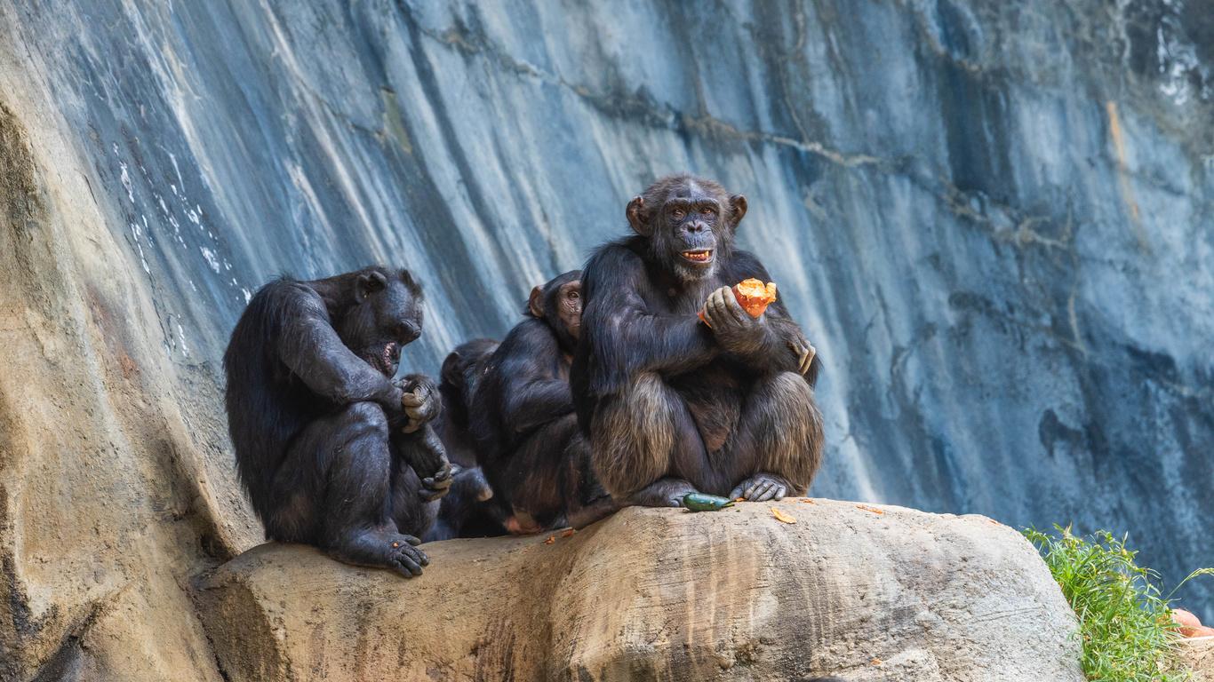 обезьяны, сидит, животные