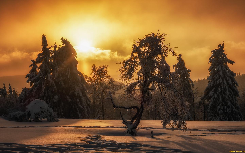 деревья, снег, рассвет