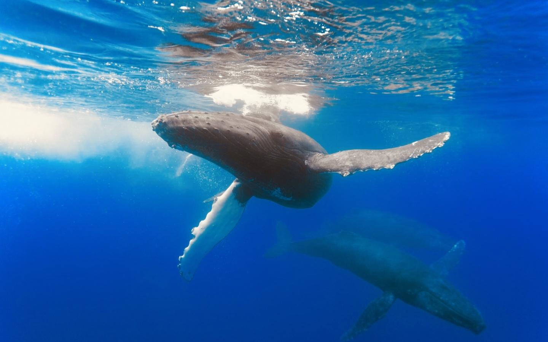 Картинки с китами, открыток хорошего