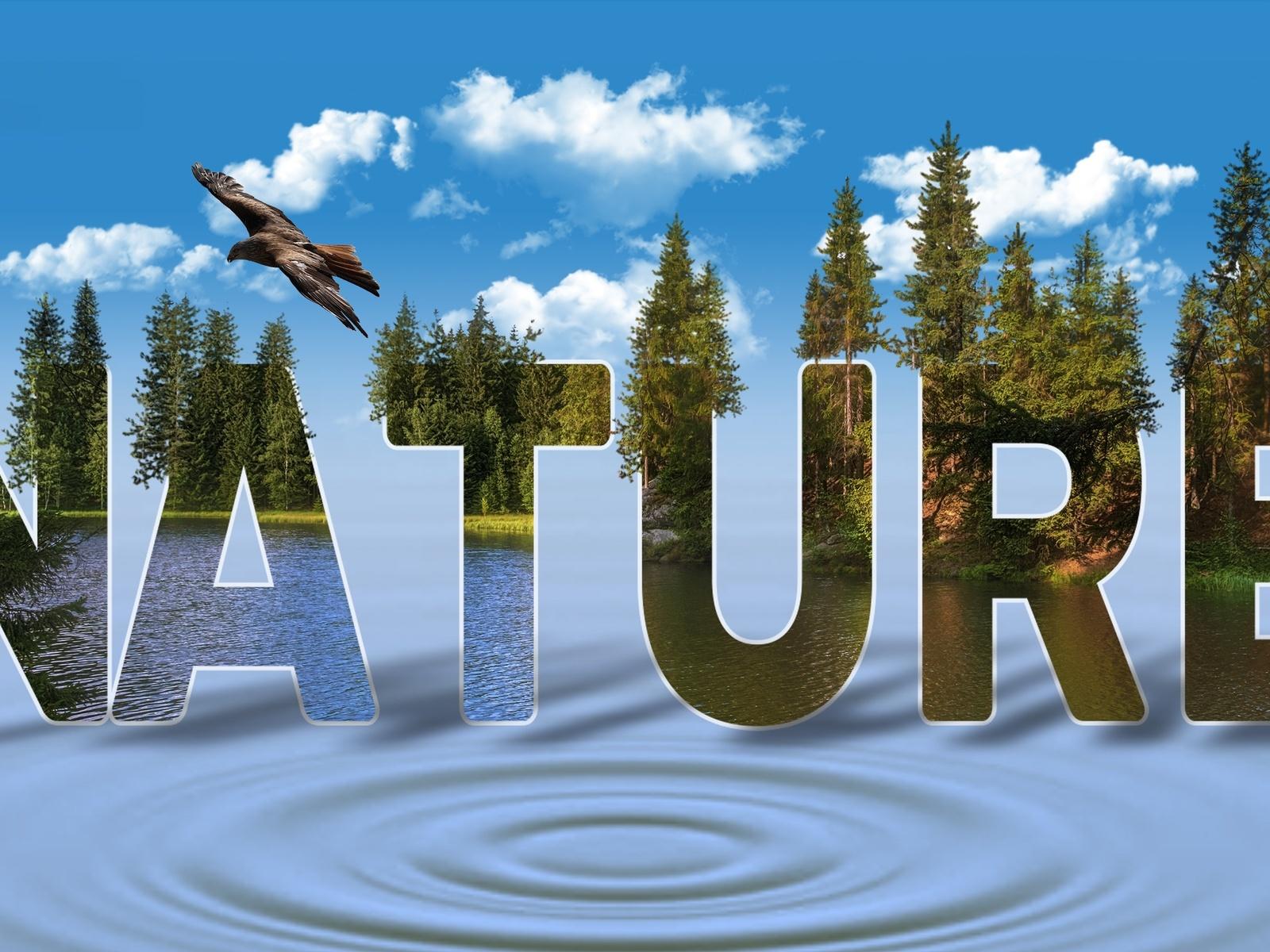 небо, облака, лес, вода, птица, надпись, nature, природа