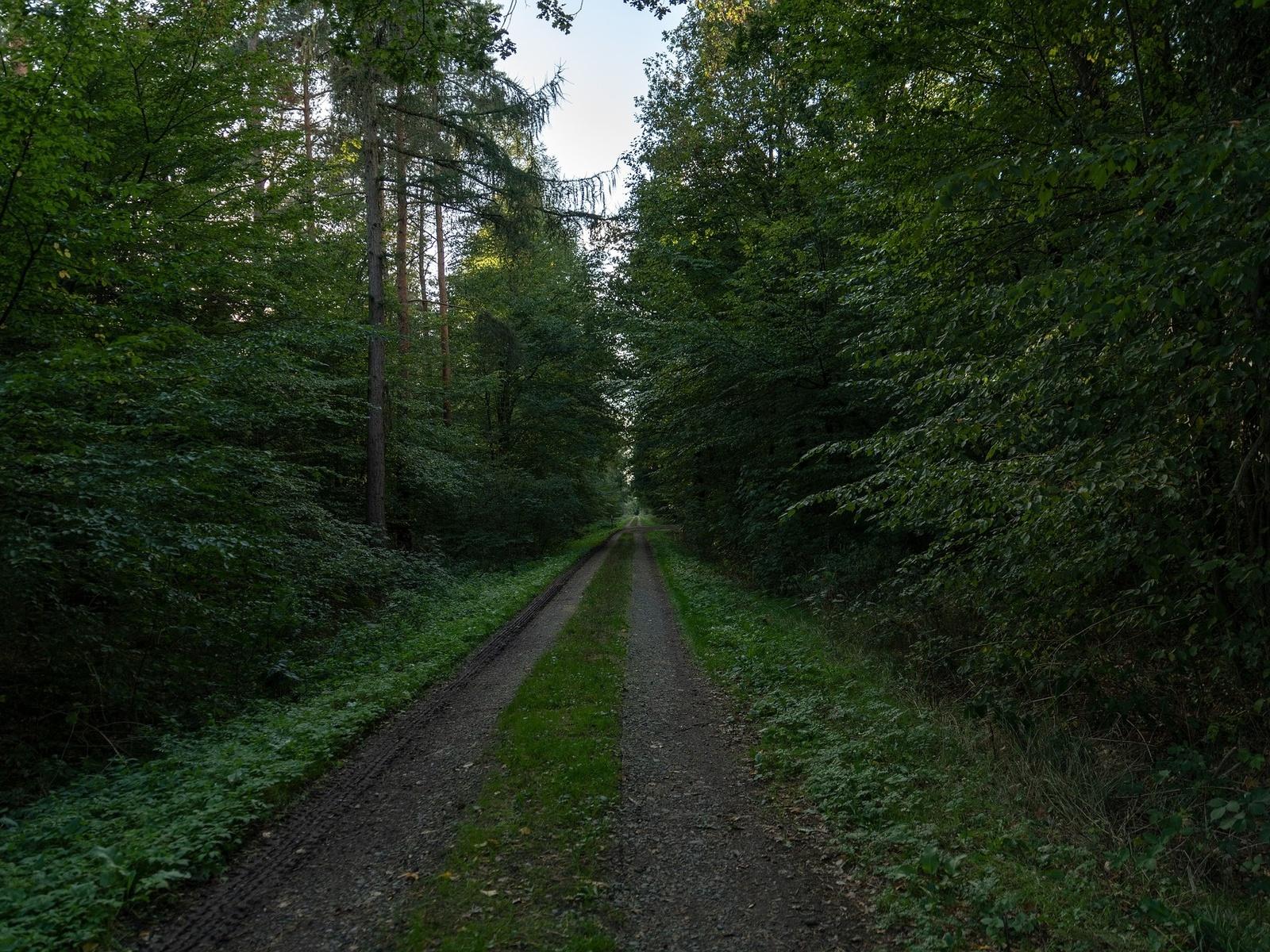 лес, тропинка, лето