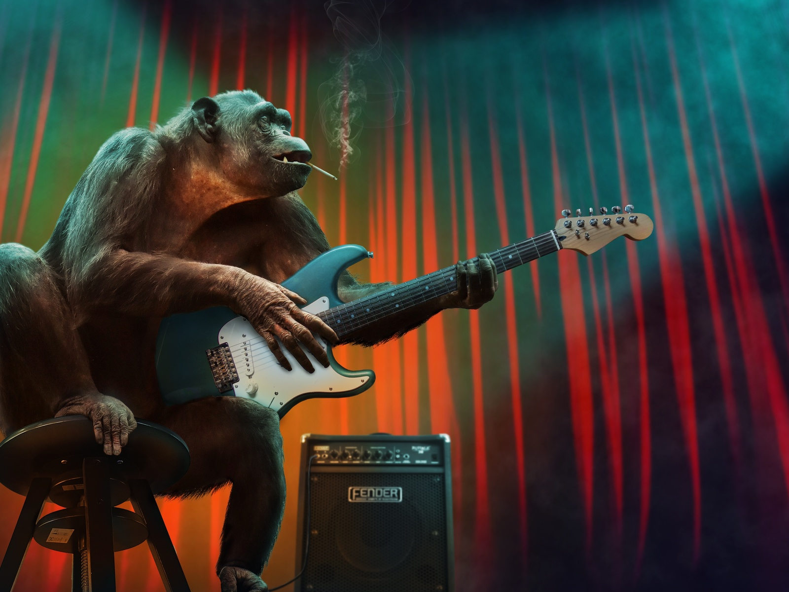 обезьяна, концерт, гитара, усилитель, сигарета, юмор