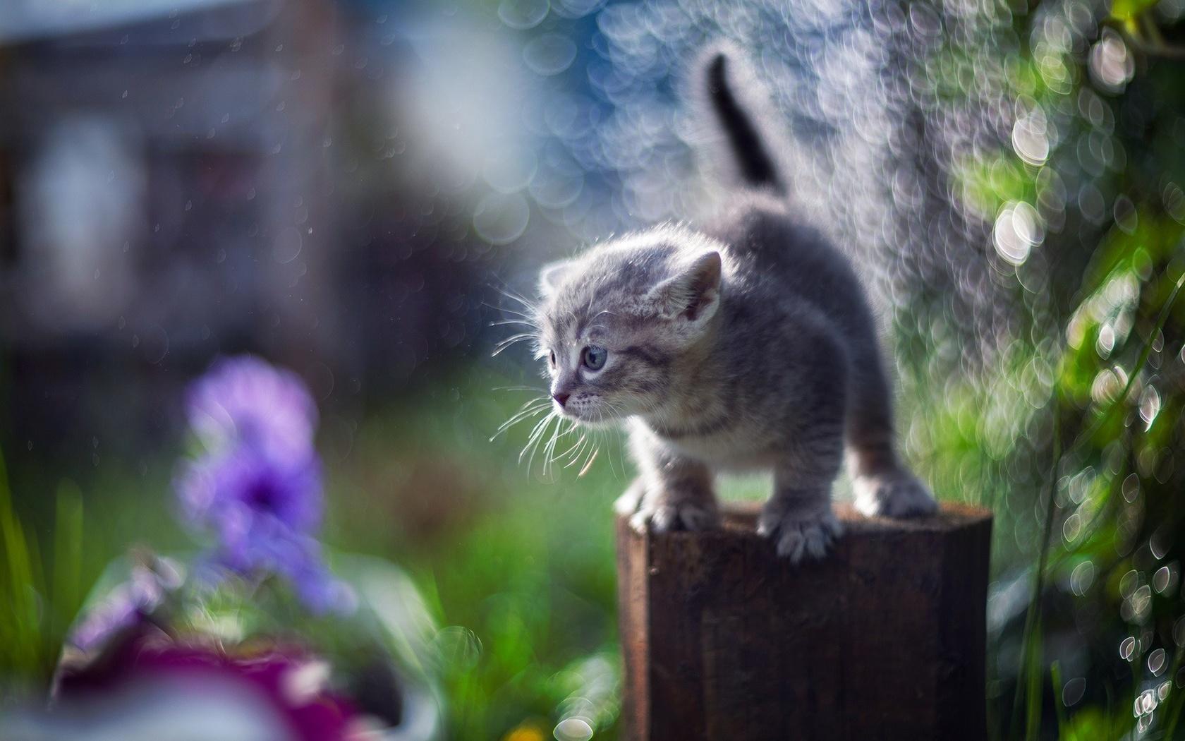 котёнок, кошка, кот, боке
