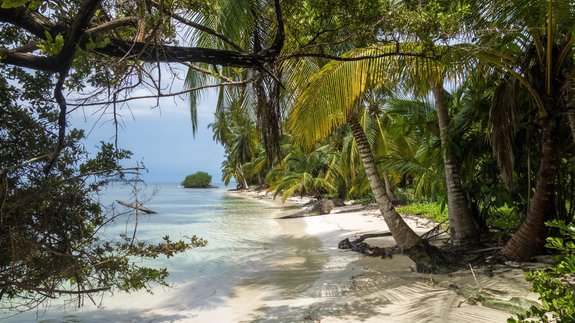 пальма, тропики, океан
