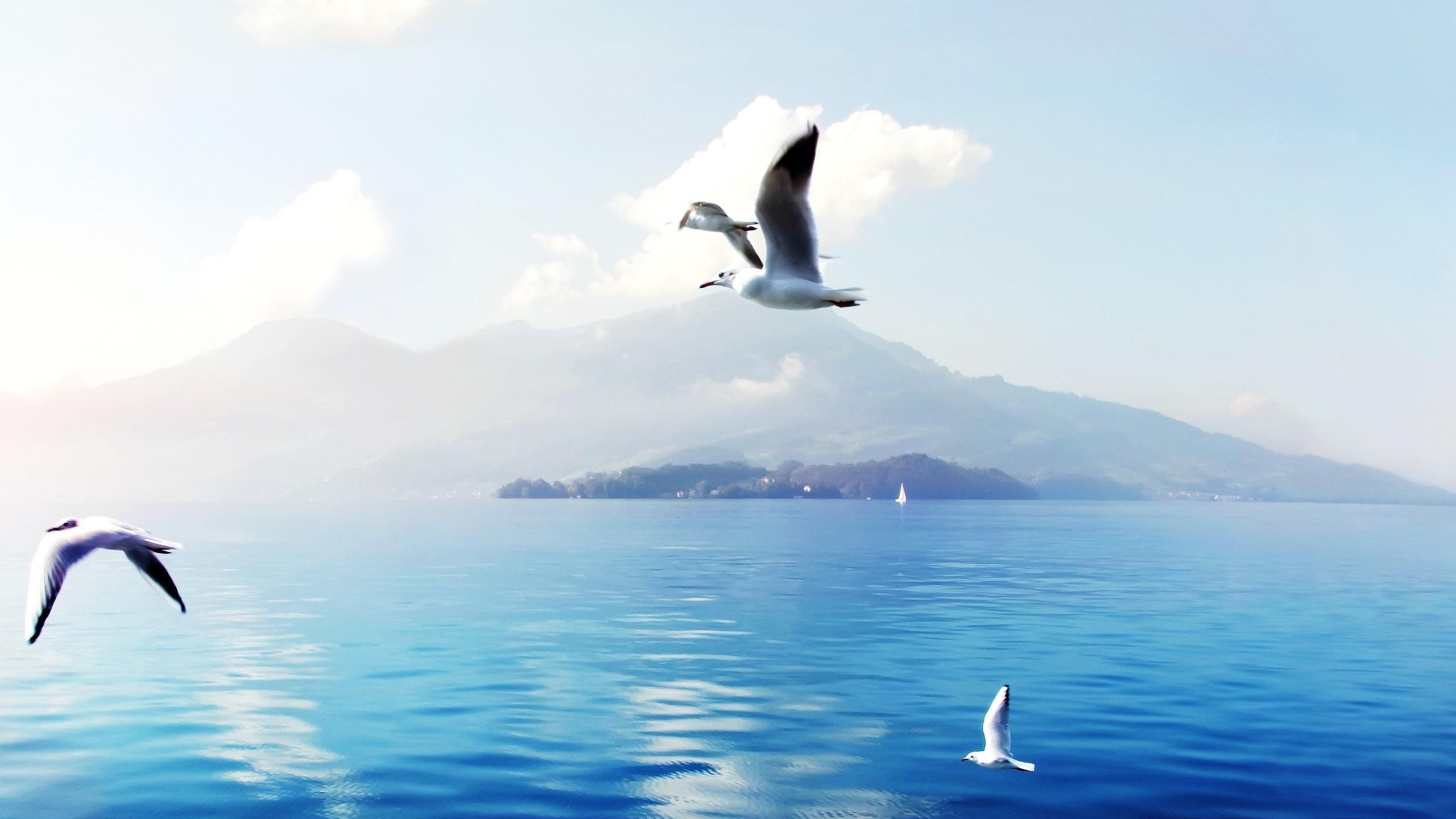 Сделать открытку, открытки с морем чайки