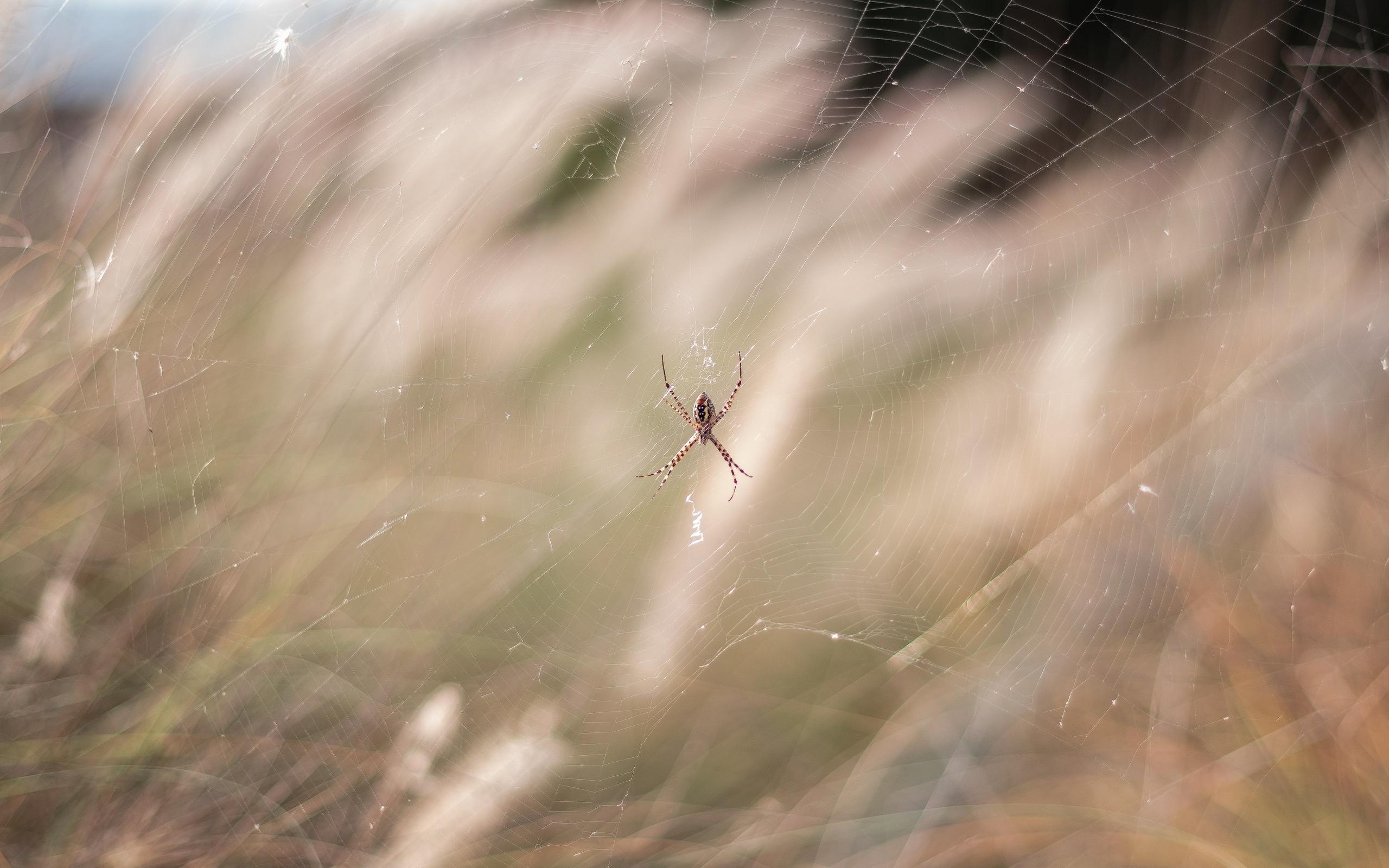 паук, природа, макро