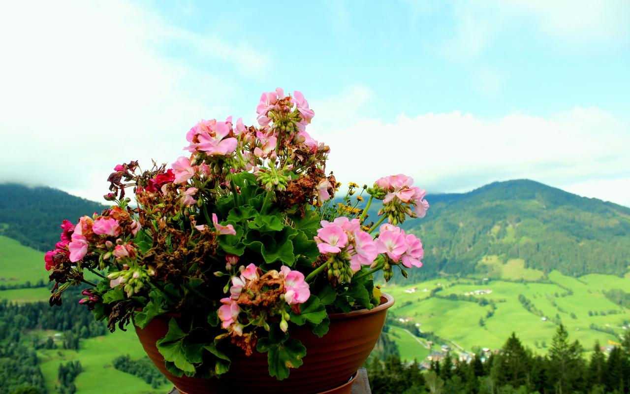 цветы, горшок, пейзаж, боке