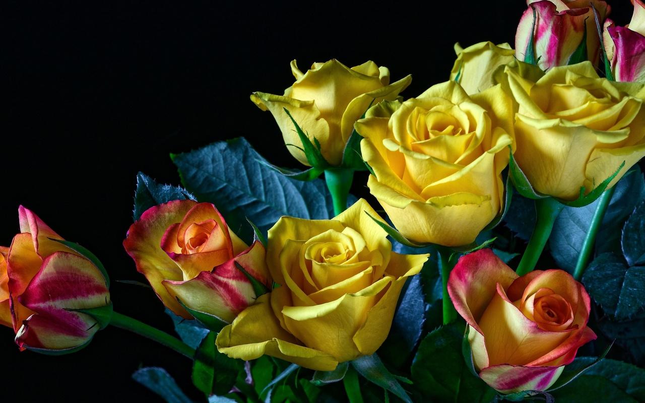 цветы, бутоны, розы, лепестки, букет