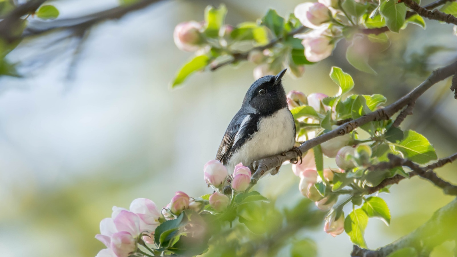 природа, весна, ветки, цветение, птица