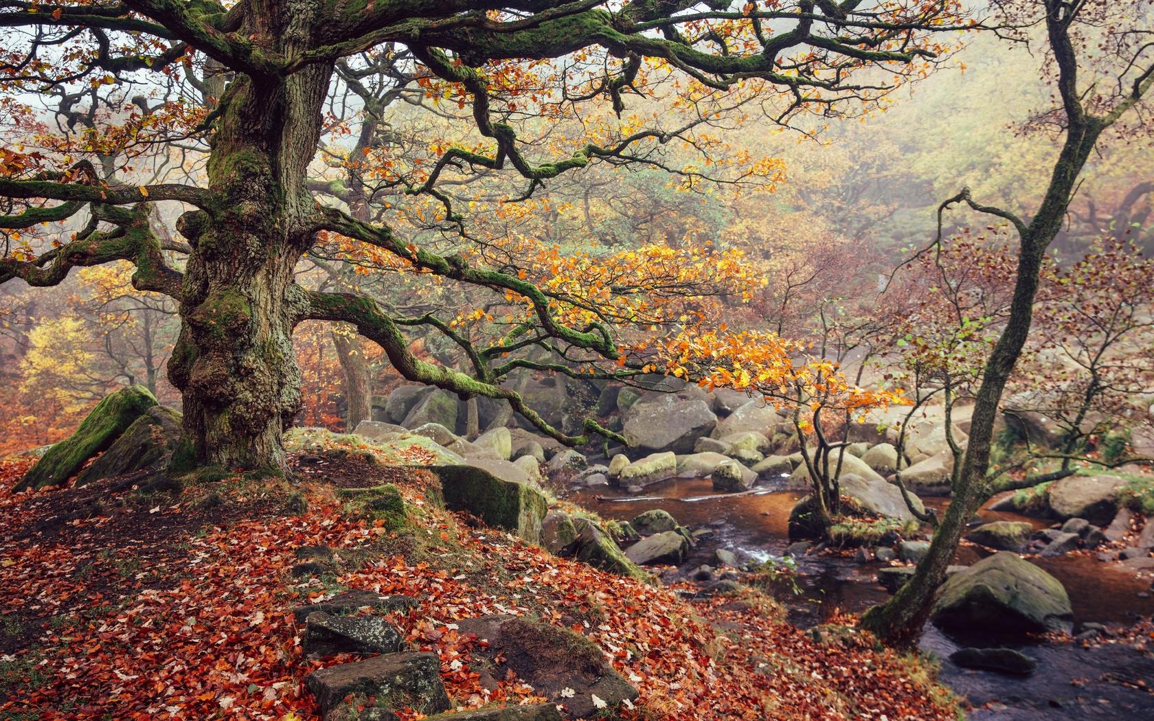 листья, ручей, осень, река