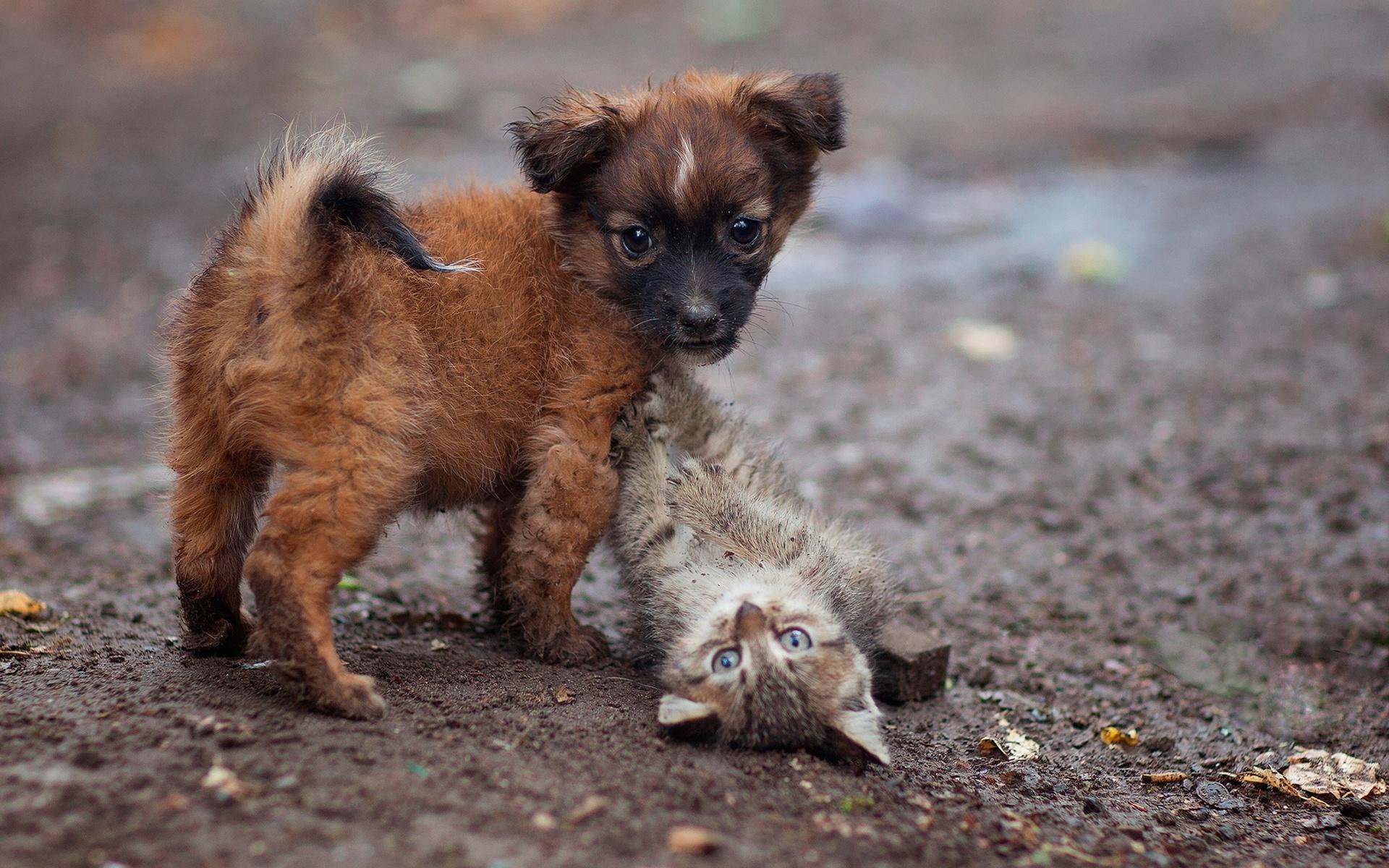 животные, котёнок, щенок, детёныши, парочка, игра