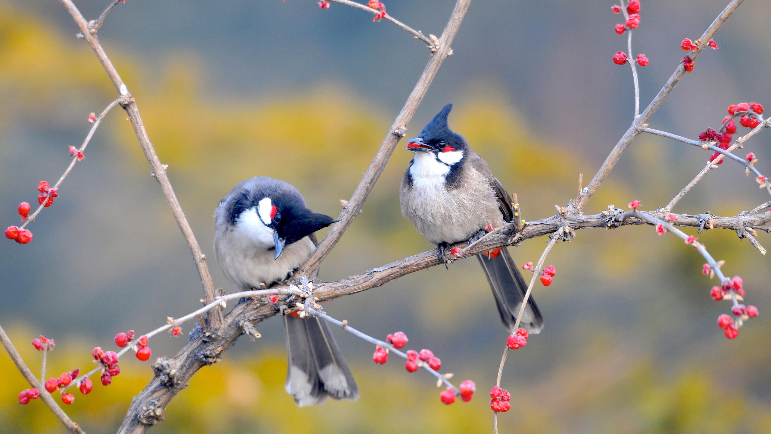 птицы, ветка