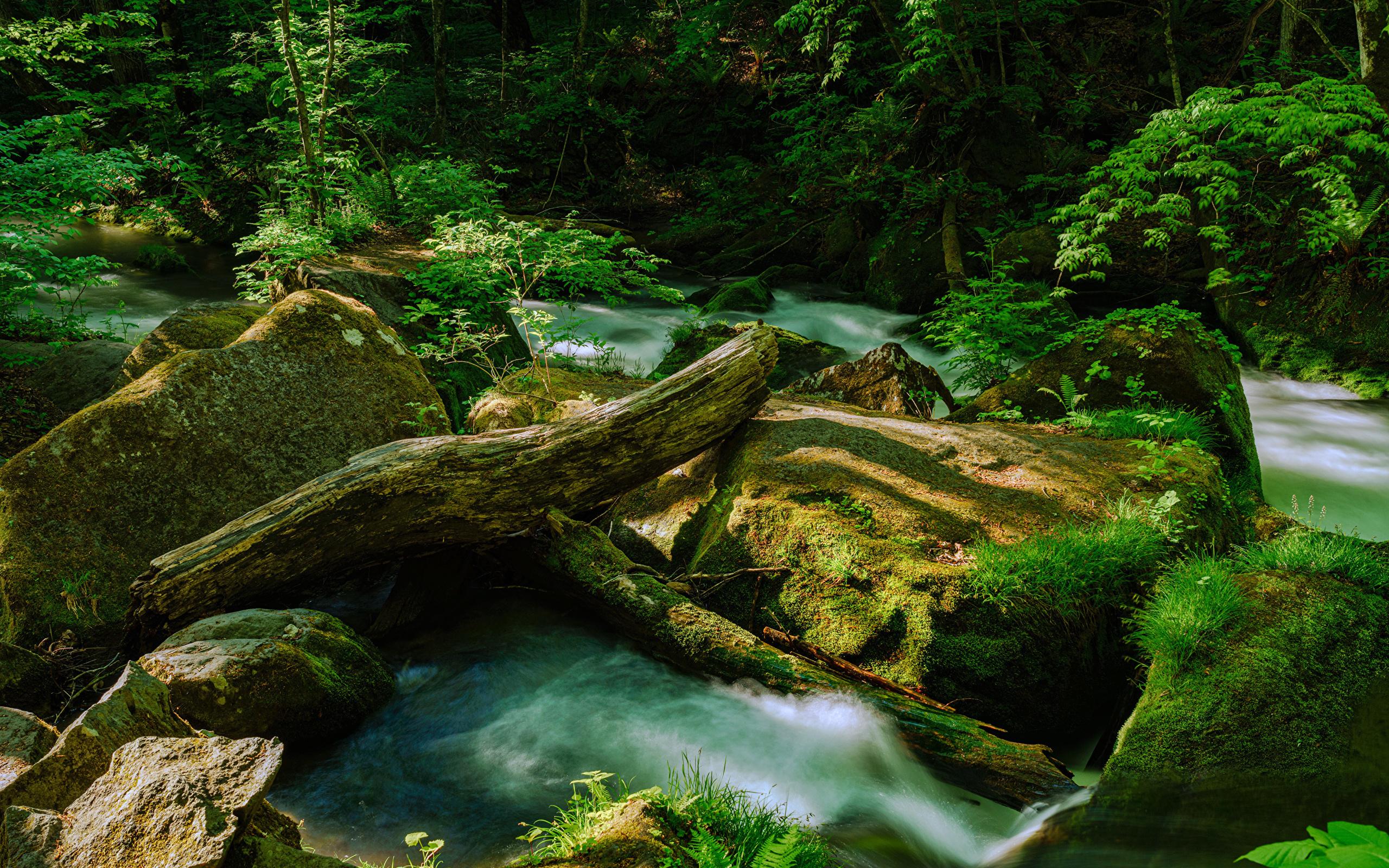 Япония, лес, водопад, камни, aomori prefecture, мох, бревна, природа