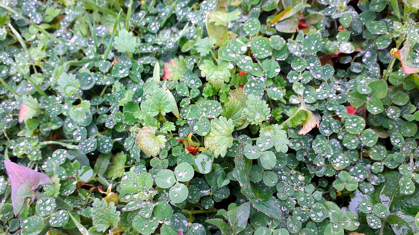 утренняя, роса, капли, трава, ноябрь