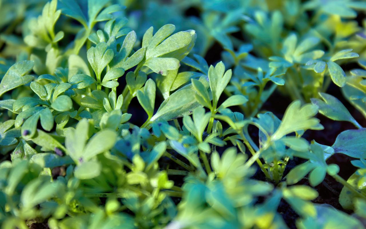 листики, роса, влага