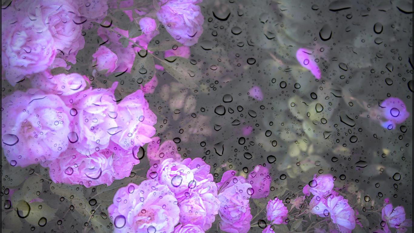 стекло, капли, дождь, розы