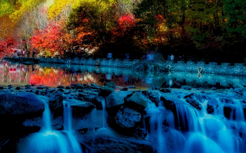 осень, деревья, ручей