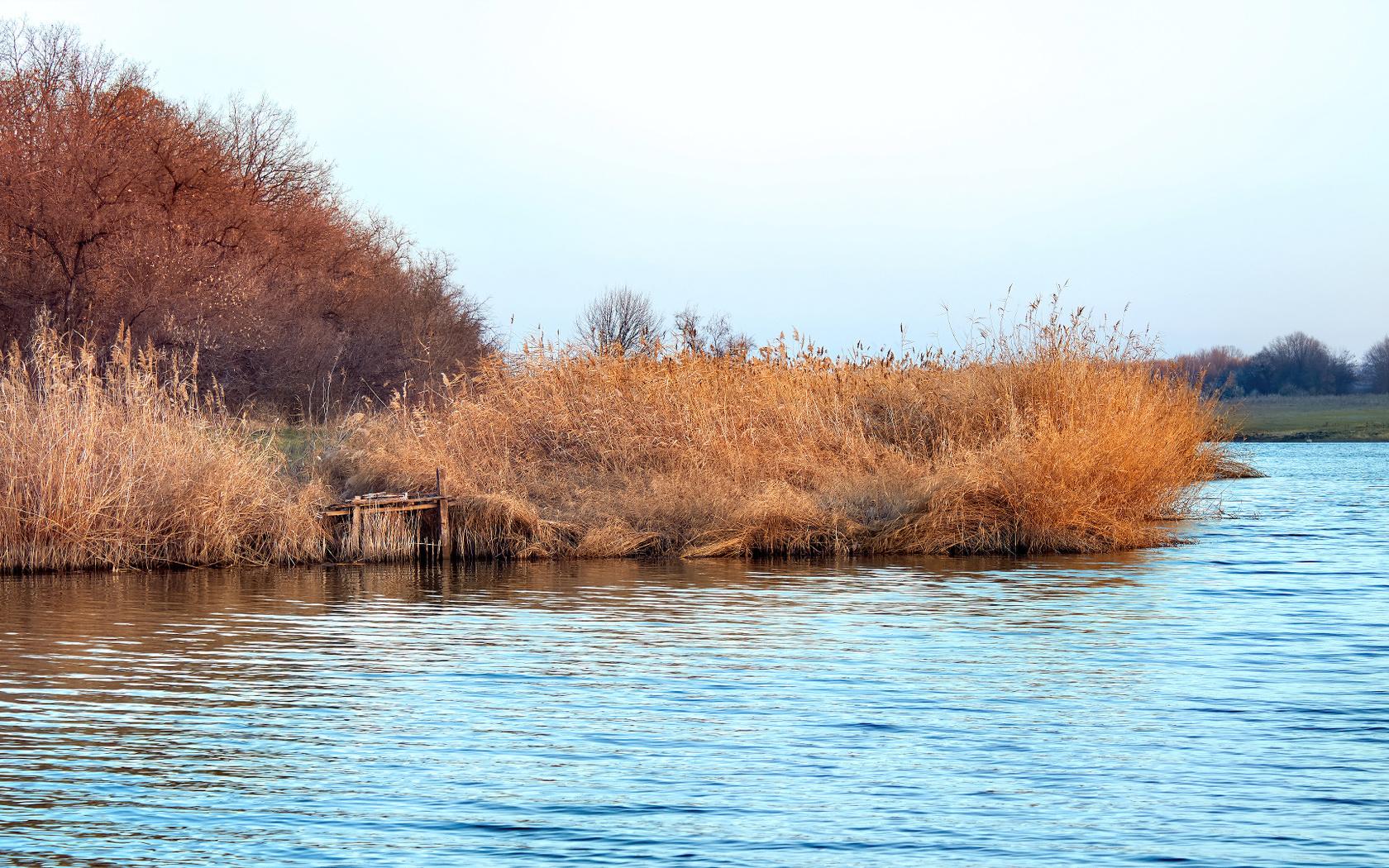 осень, озеро, камыш