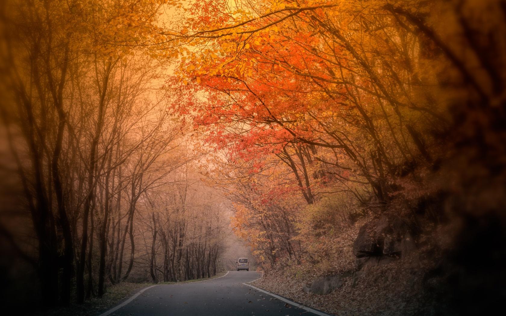 осень, деревья, дорога, туман