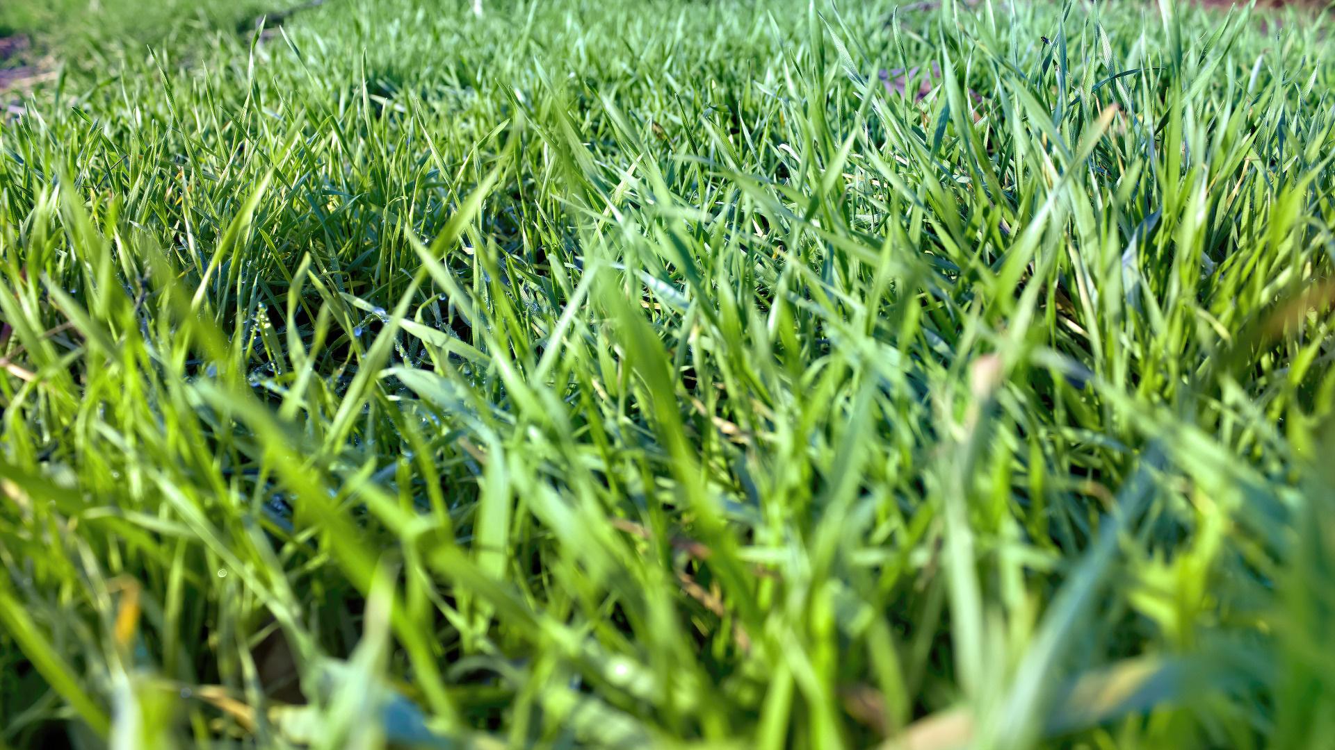 трава, роса, стебли
