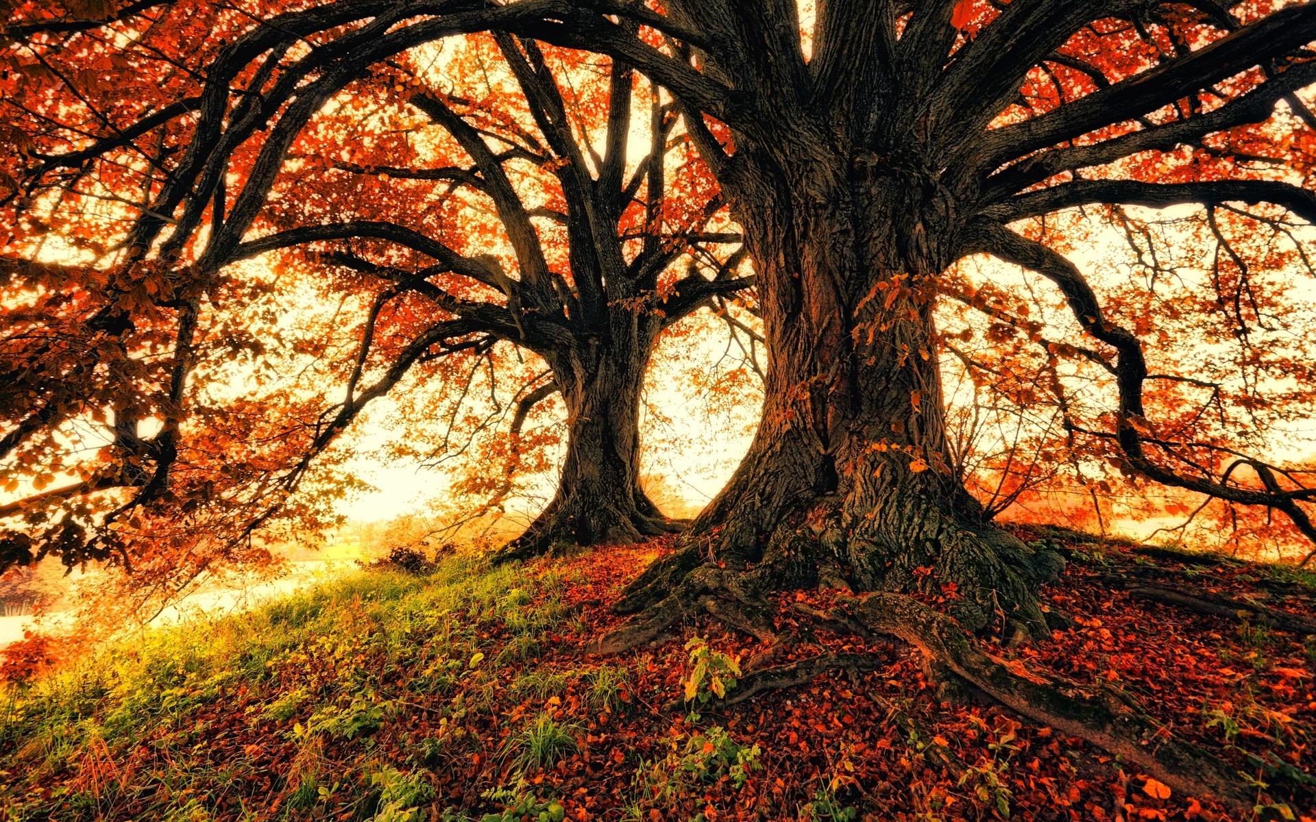 осень, деревья, природа, листва