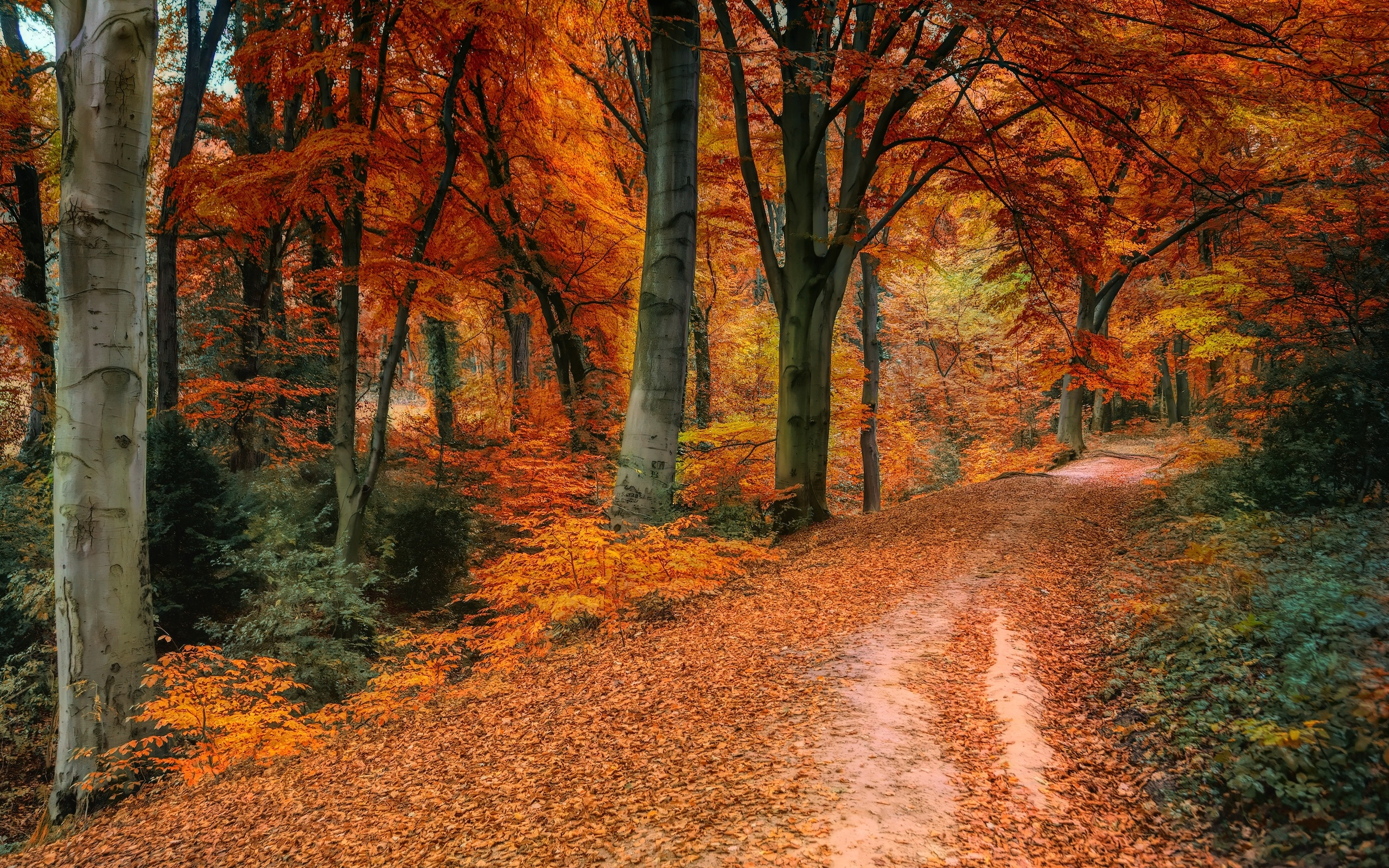 дорога, осень, лес, деревья, пейзаж, природа, парк