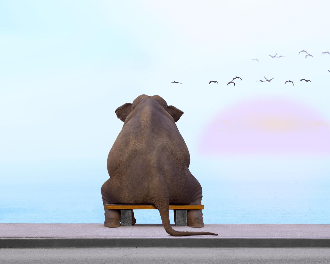 слон, море, раздумья, закат