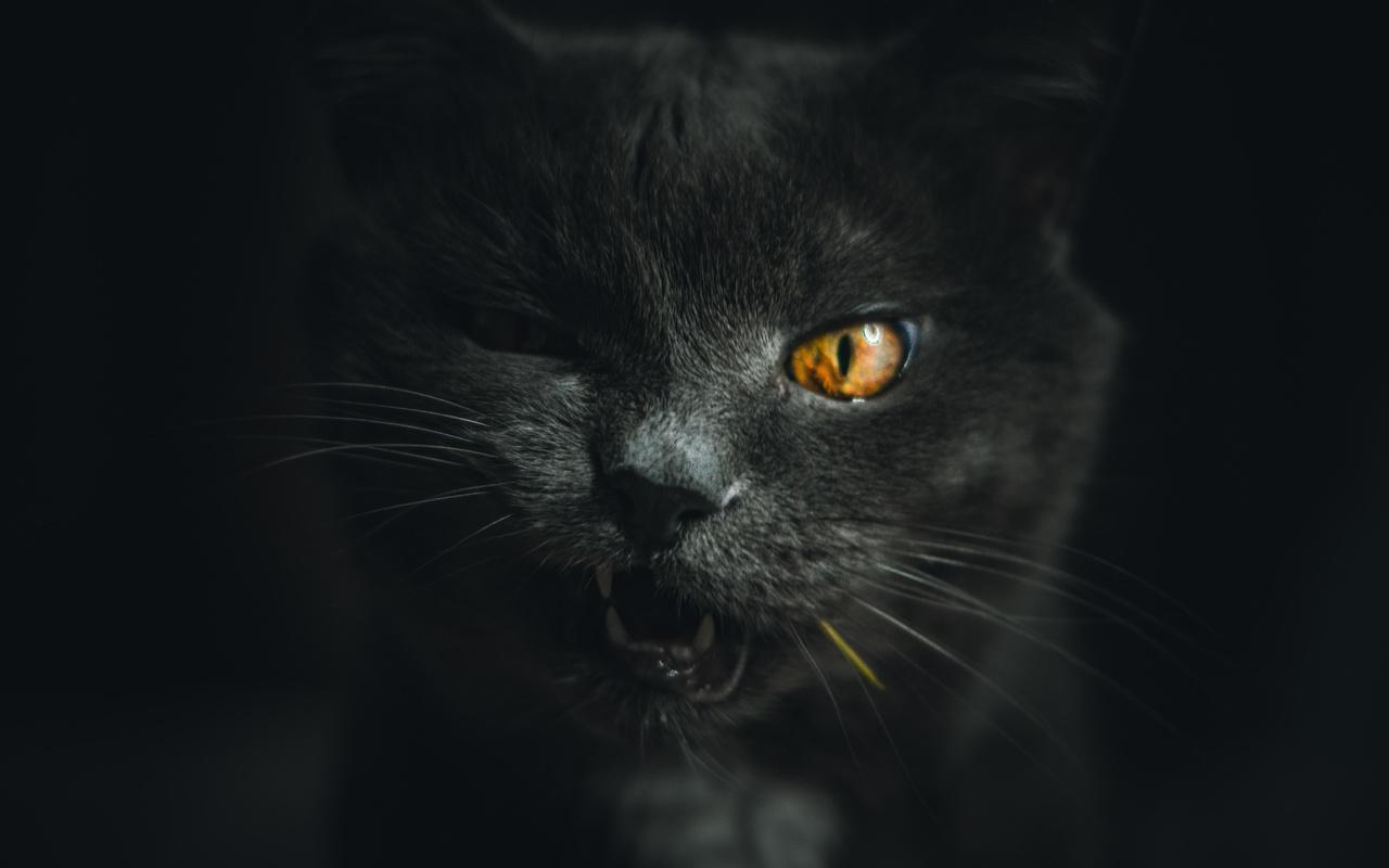 кот, морда, усы
