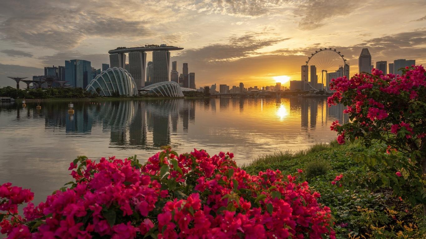 цветы, закат, город, сингапур