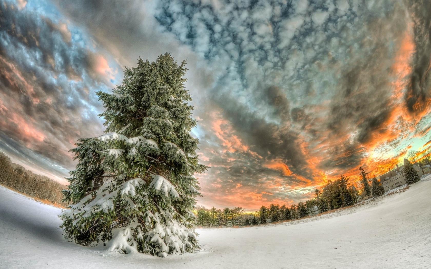 зима, снег, лес, дерево