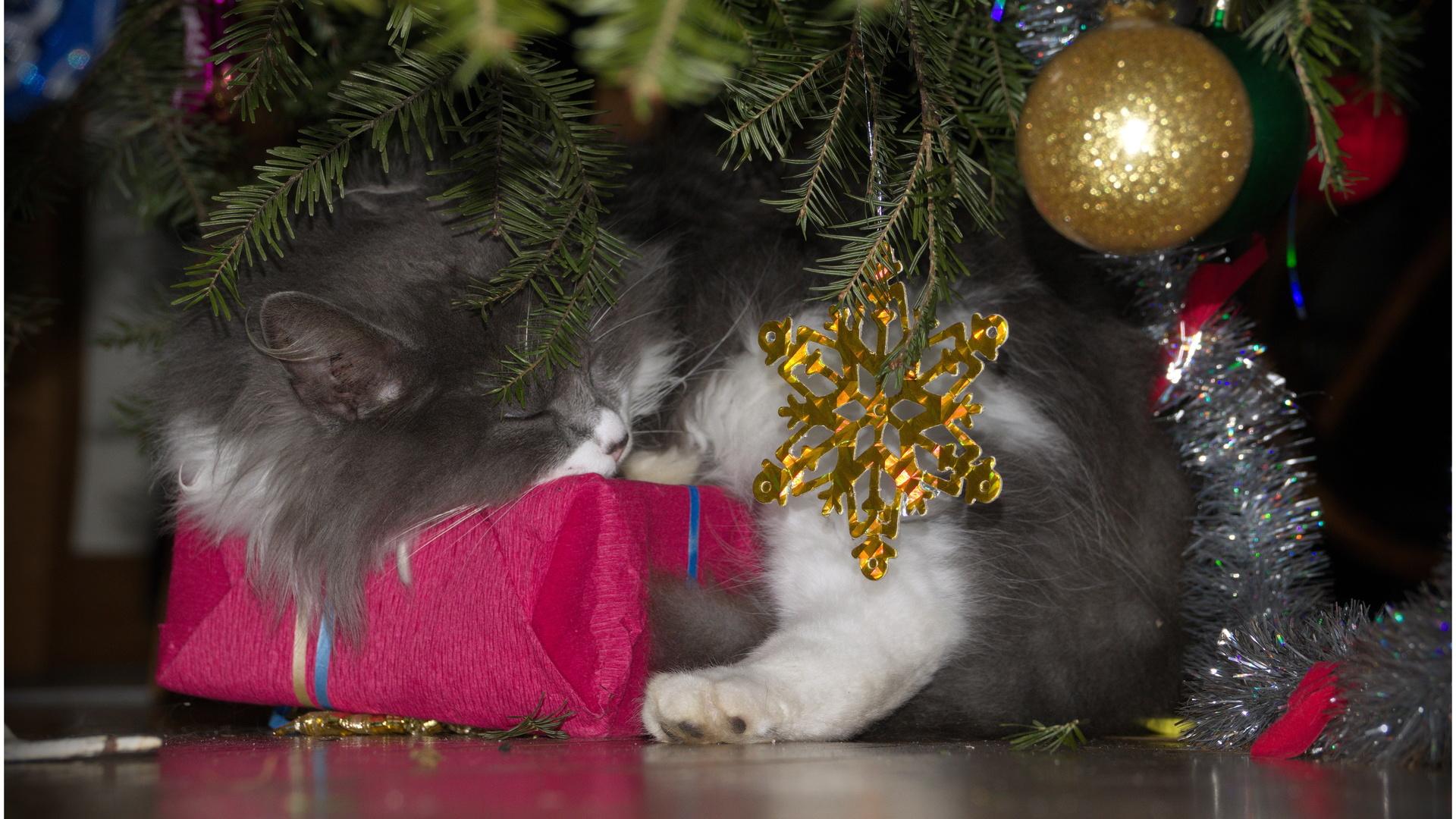 кот шурик, после нового года