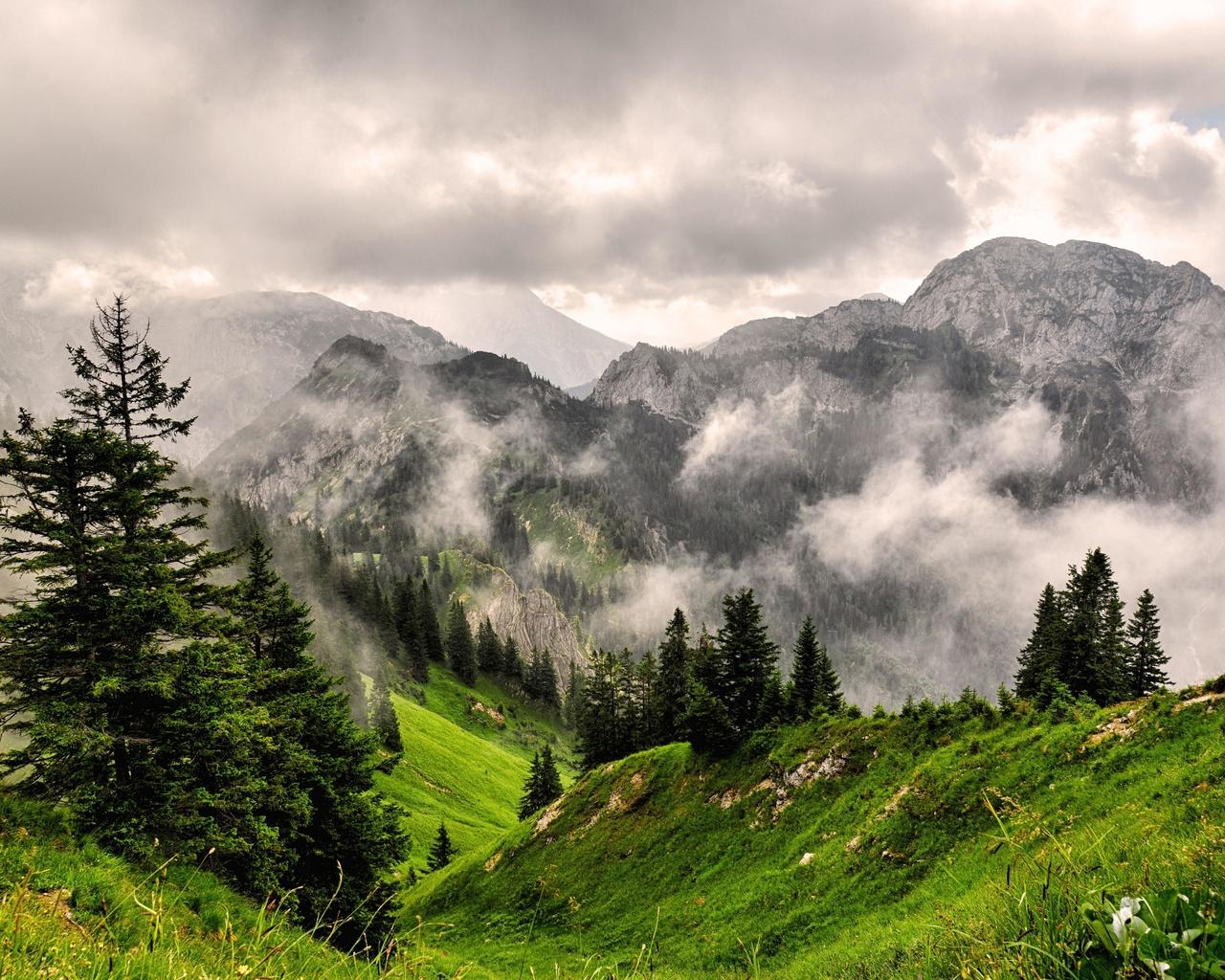 туман, горы, лес, вершины, трава