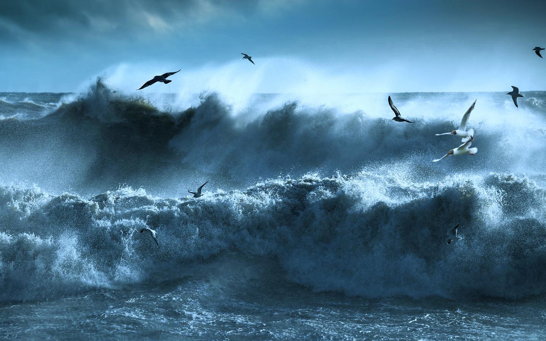 океан, небо, птицы, шторм