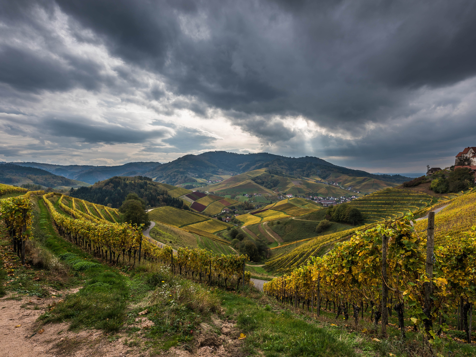 германия, поля, осень, пейзаж, виноградник, холмы, кусты, природа